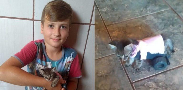 Menino faz carrinho para gato andar novamente e comove internautas