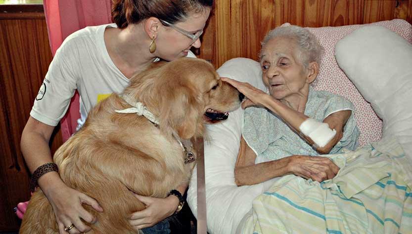 Agora é lei: animais podem visitar pacientes em hospitais do Rio
