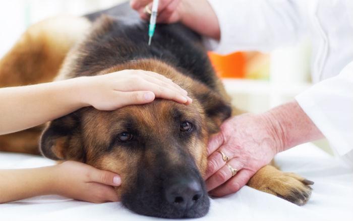 Diabetes em cães: causas, sintomas e tratamento