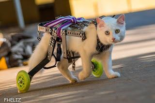 Somos todos Paçoca: a história de um gatinho muito especial e seus irmãos